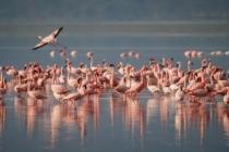 Bir Göl Daha Kurudu, Flamingolar Tehlikede