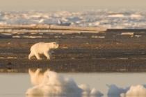 Değişen İklimde Okyanus ve Kriyosfer Özel Raporu