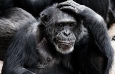 4 Ekim Dünya Hayvanları Koruma Günü