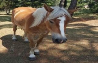 Faytona Binme Atlar Ölüyor