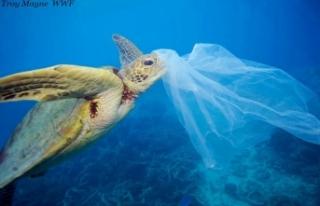 Küresel Plastik Sözleşmesi Çağrısı