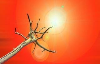 Tarihin En Sıcak 2. Yılı: 2020